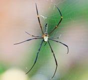 Geschlossen herauf wilde Spinne Stockfotografie