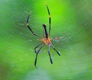 Geschlossen herauf wilde Spinne Lizenzfreies Stockfoto