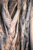 Geschlossen herauf Wurzel des Baums stockfotografie