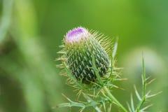 Geschlossene Blume Lizenzfreies Stockbild