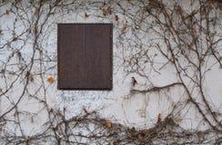 Geschlossene Fensterblendenverschluss-Efeuwand Stockfotografie