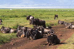 Geschlossene Welt Ngorongoro tanzania Stockfoto
