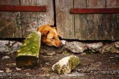 Geschlossener Hund Hund nach der Tür Der Hund schaut vom Loch in der Tür Stockfoto
