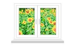 Geschlossenes Fenster mit einer Art auf dem Feld von Sonnenblumen Stockbild