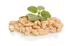 Geschmackvolle Acajounüsse mit Blättern Lizenzfreie Stockfotografie