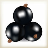 Geschmackvolle Beere der Schwarzen Johannisbeere, Lüge mit drei Früchten eine Pyramide, natürliches neues Lebensmittel, Früchte e Stockfotos