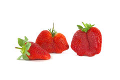Geschmackvolle Erdbeeren auf Weiß Stockbild