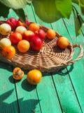 Geschmackvolle Nektarinen und Aprikosen auf einem Holztisch Lizenzfreie Stockfotos