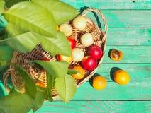 Geschmackvolle Nektarinen und Aprikosen auf einem Holztisch Stockbilder