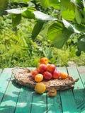 Geschmackvolle Nektarinen und Aprikosen auf einem Holztisch Lizenzfreies Stockbild