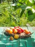 Geschmackvolle Nektarinen und Aprikosen auf einem Holztisch Lizenzfreie Stockfotografie