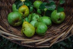 Geschmackvolle und gesunde Ernte stockfotos