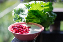 Geschmackvoller Grieß mit frischer Erdbeere Stockbild