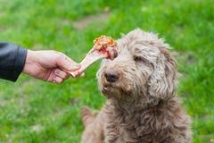 Geschmackvoller Knochen u. Hund, die auf sein Mittagessen warten Stockbilder