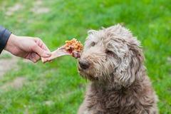 Geschmackvoller Knochen u. Hund, die auf sein Mittagessen warten Stockfotografie