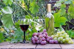 Geschmackvoller Wein auf Holztisch auf einem Hintergrund von Weinbergen Stockbild