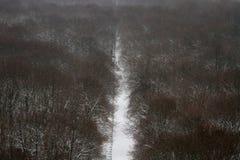 Geschneite Bäume Stockfoto