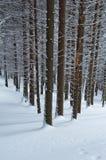 Geschneiter Wald Stockbild