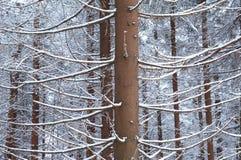 Geschneiter Wald Lizenzfreie Stockfotos
