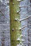 Geschneiter Wald Lizenzfreie Stockfotografie