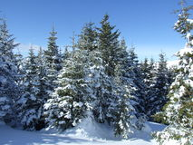 Geschneiter Wald stockfotos