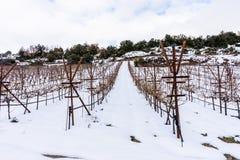 Geschneites Feld in Griechenland stockfotos