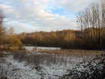 Geschneites Feld während des Winters Stockfoto