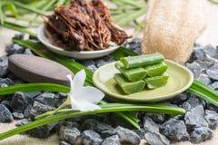 Geschnittene Aloe Vera verlässt auf Platte, Badekurortelemente Stockbild