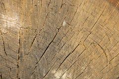 Geschnittene alte Baumstammbeschaffenheit Schließen Sie oben vom Baumkabel Lizenzfreies Stockbild