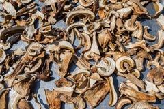 Geschnittene frische essbare Pilze des Boletus auf Metalloberfläche Trocknender Prozess unter Sonnenlicht stockbild
