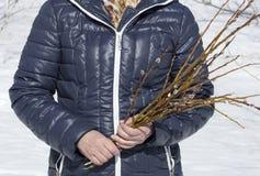 geschnittene Zweige der Weide lizenzfreies stockfoto