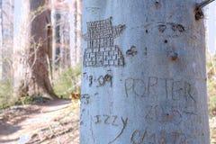 Geschnitzter Baum in weißem Clay Creek lizenzfreie stockfotografie
