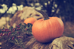 Geschnitzter Halloween-Kürbis Stockfotografie