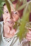 Geschokte hogere vrouw met Cannabisinstallatie Stock Foto's