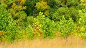 Geschossen auf Kennzeichen II Canons 5D mit Hauptl Linsen Autumn Sunrise In Green Forest stock video
