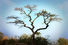 Geschossen im Sodwana Buchtcampingplatz, Kwazulu Natal Provinz, südlicher Mosambik-Bereich, Südafrika Stockfoto