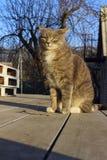 Geschossen von Cat Sitting Outdoor Katze der getigerten Katze draußen stockbilder
