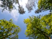 Geschossen von den hohen B?umen, die den Himmel in der Mitte gestalten Hellgrüne Wipfel vertikal auf Hintergrund des blauen Himme stockfotografie