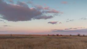 Geschoten op Canon 5D Mark II met Eerste l-Lenzen Rusland De winterzonsondergang met lilac wolken over het riet in steppe stock video