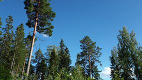Geschoten op Canon 5D Mark II met Eerste l-Lenzen Schitterende landschapsmening op mooie zonnige de zomerdag Groene bomen en inst stock video