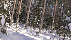 Geschoten van de winter bos en snow-covered bomen stock videobeelden