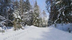 Geschoten van de winter bos en snow-covered bomen stock video