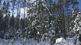 Geschoten van de winter bos en snow-covered bomen stock footage