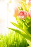 Geschoten van verse roze tulpen die zich op vensterbank bevinden royalty-vrije illustratie