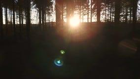 Geschoten van zonlicht bij zonsondergang of zonsopgang die door de bomen in een donker bos flakkeren stock video
