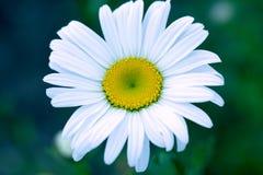 Geschotene bloemmacro, abstracte foto van een bloem Royalty-vrije Stock Foto