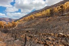 Geschroeide struiken en bomen op een helling na brand in Sicilië, het stock afbeelding