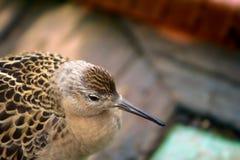 Geschwächtes Vogelflugmeer und gesessen auf Schiffsdeck Lizenzfreies Stockfoto