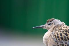 Geschwächtes Vogelflugmeer und gesessen auf Schiffsdeck Stockfotos
