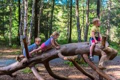 Geschwister, die auf einer großen Anmeldung einen Wald klettern lizenzfreie stockbilder